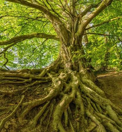 Growing a Tree is Just Like Attending to Personal Growth